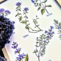 Dzikie rzeczy Obrazek - Zioła Kulinarne 40cm x 30cm